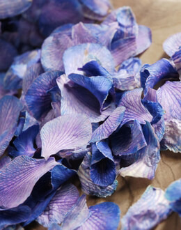 Preserved Orchids Petals Lilac Blue