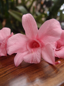 Preserved Pink Orchids Natural (8 flowers)