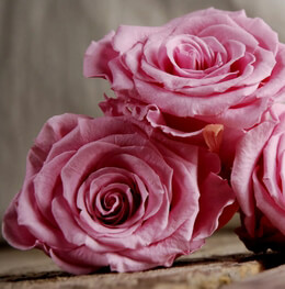 Preserved Princess Pink Roses 2.5in (6 rose heads)