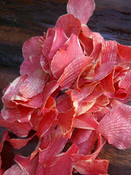 Preserved Red Orchid Petals
