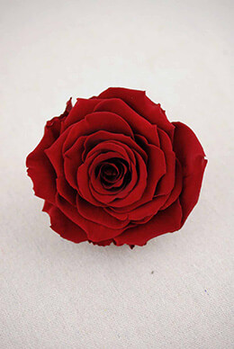 "Large 4"" Burgundy Red Preserved Rose"