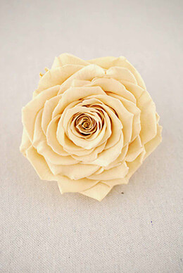 "Large 4"" Preserved Champagne Rose"