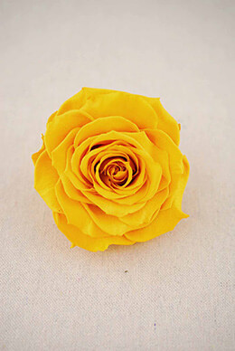 "Large 4""  Golden Yellow Preserved Roses"