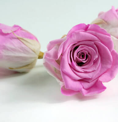 Preserved Bright Pink & White Roses 2.5in (6 rose heads)