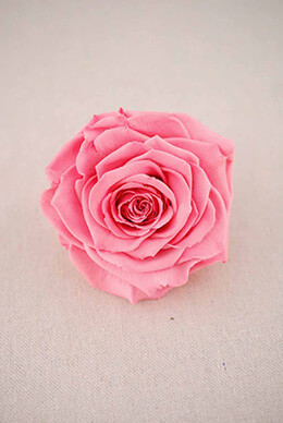 "Large 4""  Pink Preserved Rose"
