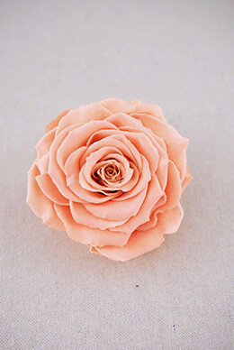 "Large 4"" Peach Preserved Rose"
