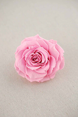 "Large 4"" Pink Preserved Roses"