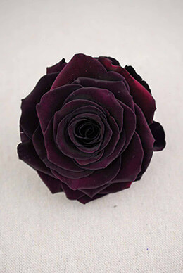 "Preserved Roses 4"" Deep Purple"