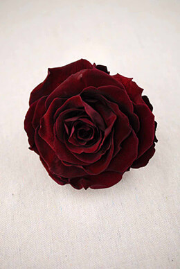 "Large 4"" Wide Raspberry Red Preserved Rose"