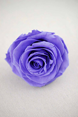 Preserved Rose Violet 3.5in