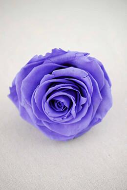 Preserved Rose Violet 3.5in