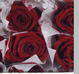 Preserved Rose Heads Burgundy (15 Roses)