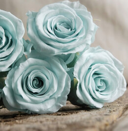 Preserved Roses Baby Blue Roses (9 rose heads)