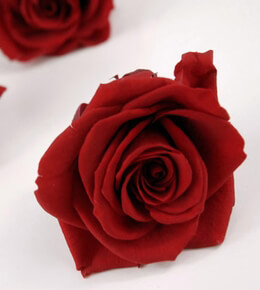 Preserved Roses Deep Red 3in (4 roses)