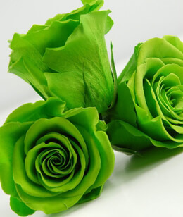 Preserved Green Rose Heads 2.5in