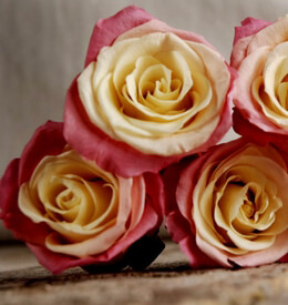 Preserved Roses Pink & Yellow | 9 heads