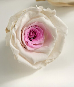 Preserved Roses White & Pink Large 2.5in (6 roses)