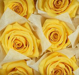 Preserved Roses Yellow 1in (12 heads)