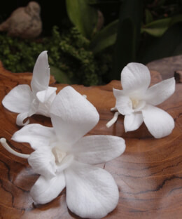 Preserved Orchids White | Pack of 8