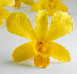 30 Bright Yellow Preserved Orchid Flowers