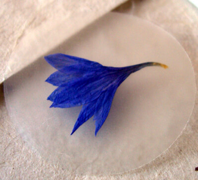 Pressed Flower Envelope Seals Blue Bachelor Buttons (12 stickers /pkg)