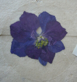 Pressed Flower Envelope Seals Dark Purple Larkspur (12 stickers /pkg)