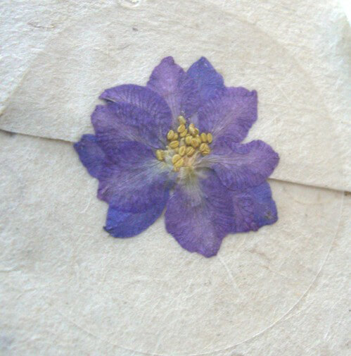 Pressed Flower Envelope Seals Lavender Blue Larkspur (12 stickers /pkg)