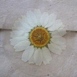 Pressed Flower Envelope Seals White Daisy Flowers (12 stickers /pkg)