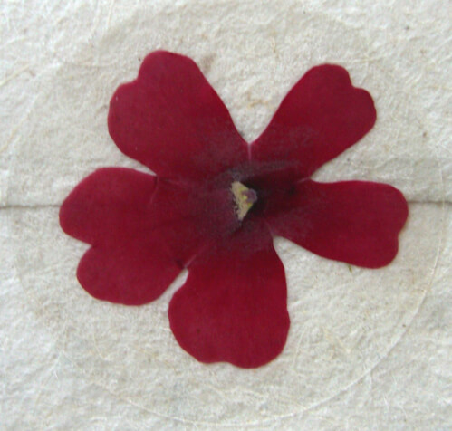 Pressed Flower Stickers Red Verbena Flowers (12 stickers/pkg)