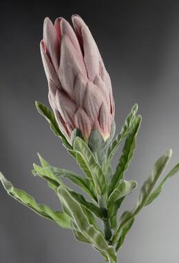 "Prince Proteas 27"" Flower Silk Flowers"