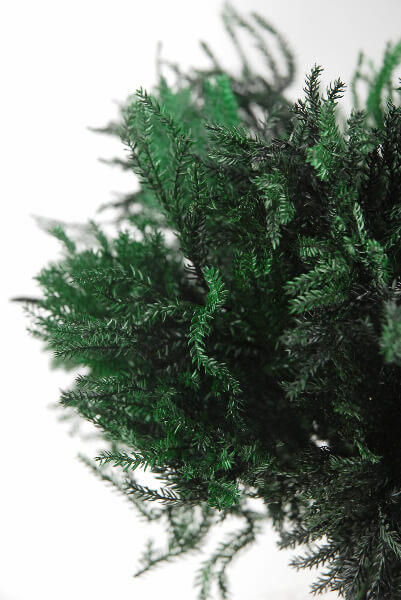 Preserved Green Pine Fern Bundle 4oz 10in