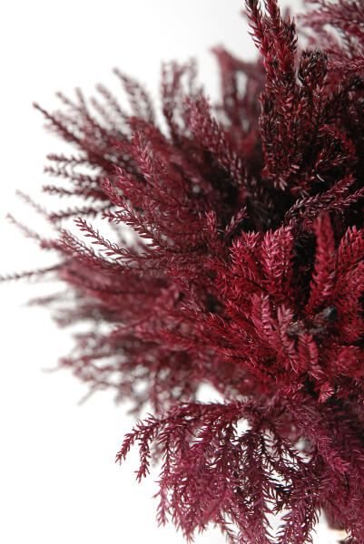 Pine Fern Bundle Burgundy
