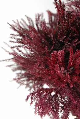 Pine Fern Bundle Burgundy