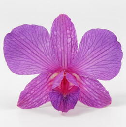 Orchid Flowers Purple & Pink Preserved (30 flowers)
