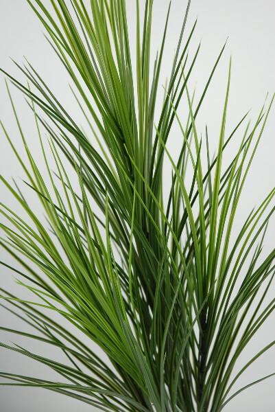 Tall pvc grass 32in for Tall thin ornamental grasses