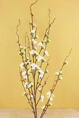 Quince Blossom Branch Cream 45in