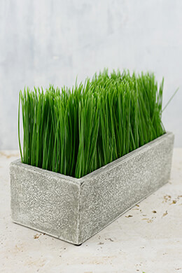 Rectangular Potted Wheat Grass Medium