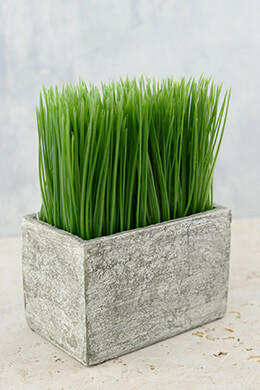 Rectangular Potted Wheat Grass Small