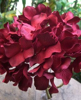 Red Hydrangeas Parchment Flowers