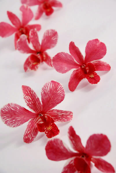 30 Preserved Red Orchid Flowers, Freeze Dried