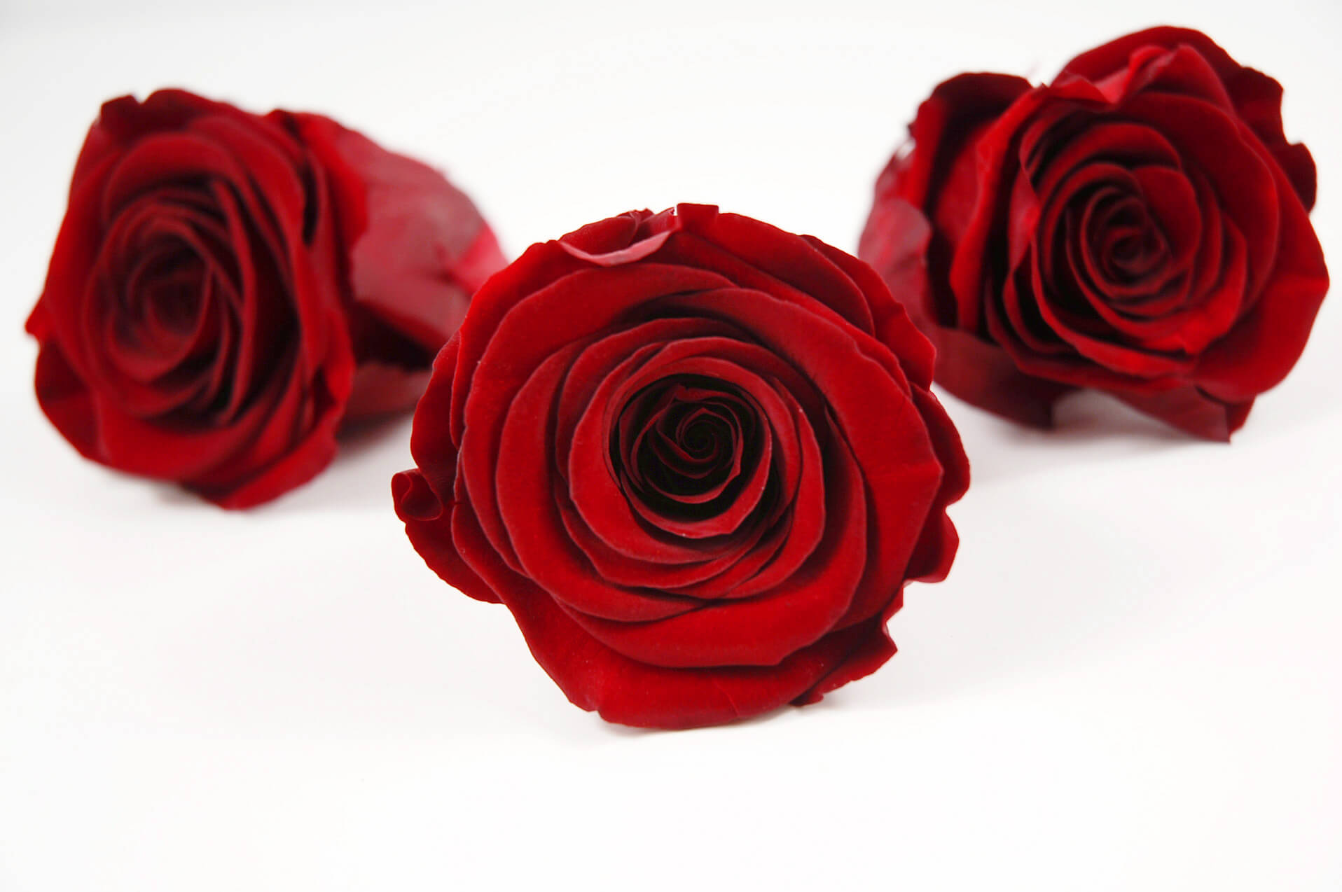 Preserved Roses Red 2.5in (6 rose heads)