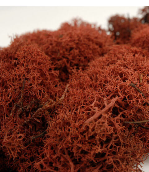 Sienna Brown Reindeer Moss   11oz.