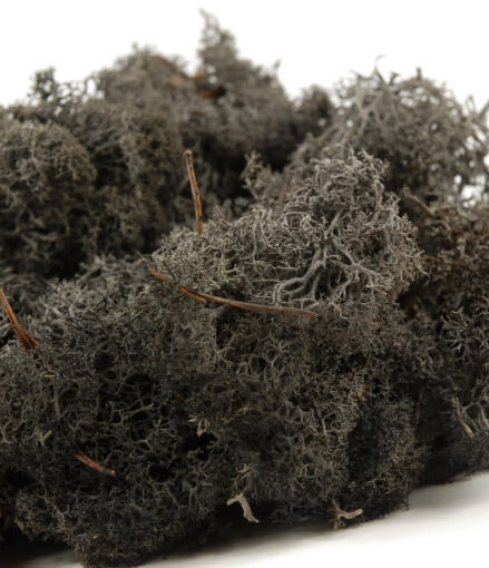 Reindeer Moss Black 11oz.