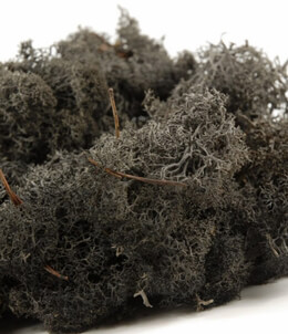 Black Reindeer Moss 11 ounces