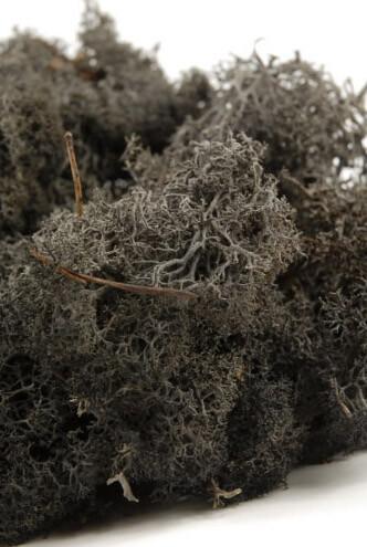 Natural Norwegian Black Reindeer Moss 11 ounces