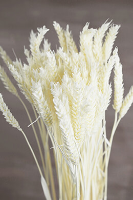 Natural Preserved White Rye Stalks Bundle 6oz