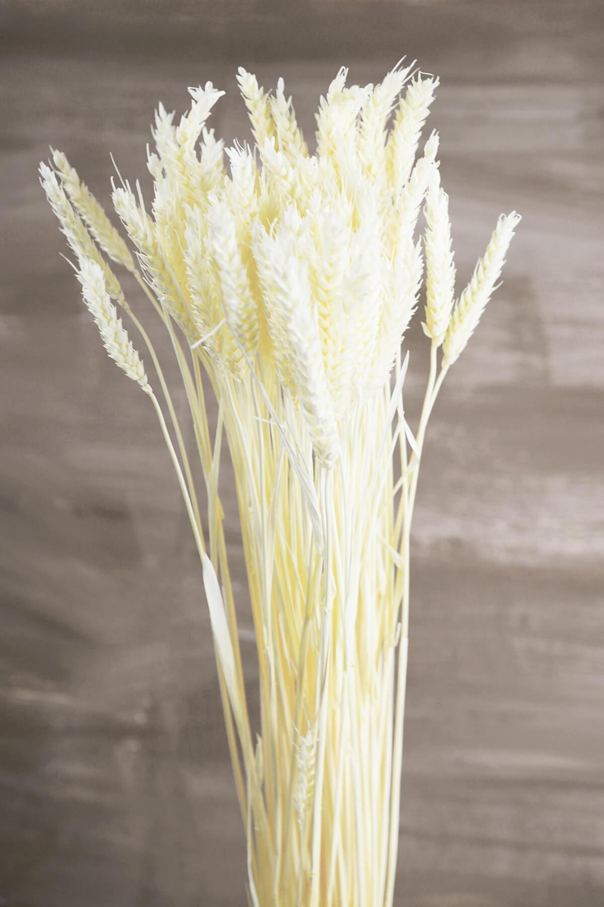 Natural Preserved White Rye Stalks Bundle 6oz