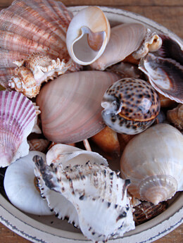 Designer Mix Shells Large