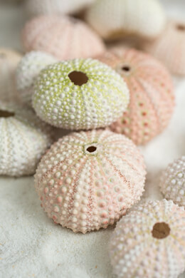 Sea Urchin Shells 24 Seashells