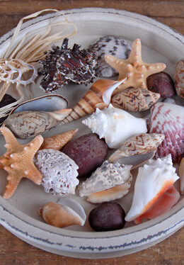 Assorted Shells, Starfish, River Rocks, Tropical Collection